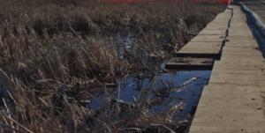 Small road through wetlands